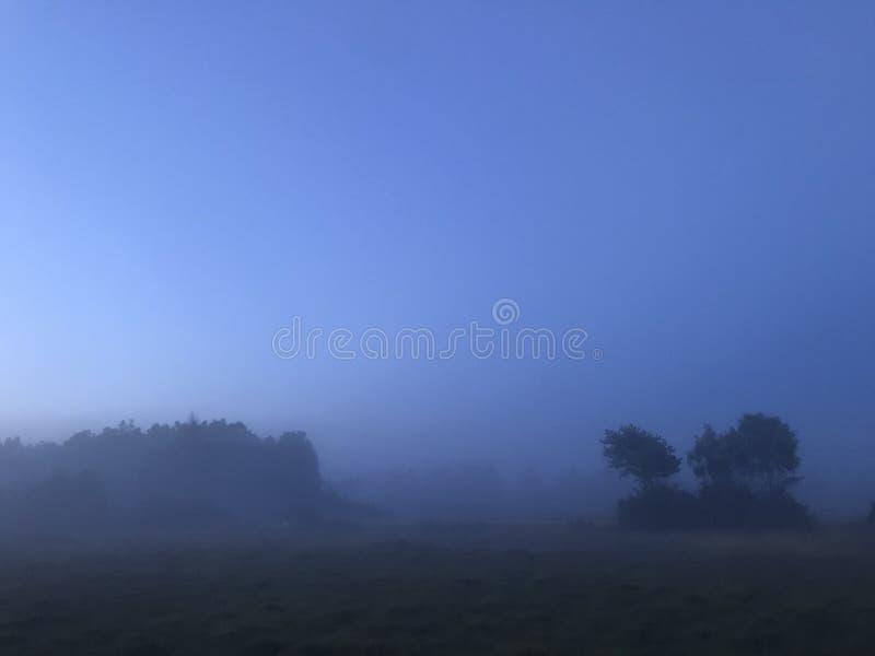 Naturlandskap Sverige för tjock dimma royaltyfria bilder