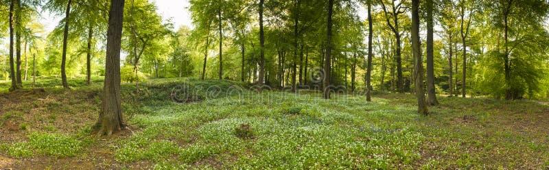 Naturlehrpfad durch verzauberten Wald stockfotos