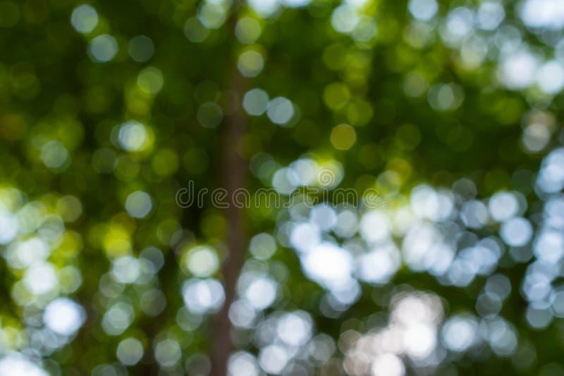 Naturlig abstrakt bakgrund med defocused ljus för grön bokeh royaltyfri fotografi