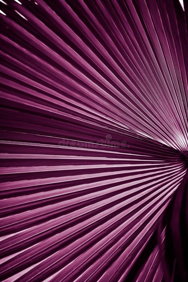 naturlig affisch dagleafen gömma i handflatan taget soligt closeup purpurt arkivfoton