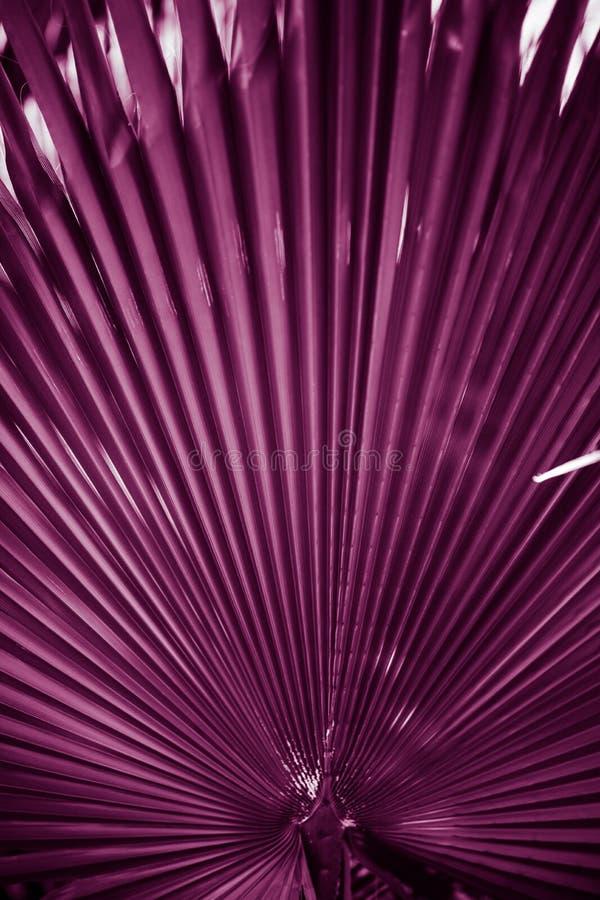 naturlig affisch dagleafen gömma i handflatan taget soligt closeup purpurt arkivfoto