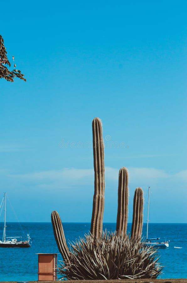 naturlig affisch kaktus och hav royaltyfri foto