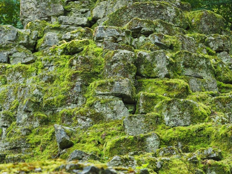 Naturlig bakgrund av vaggar med mossa arkivfoton