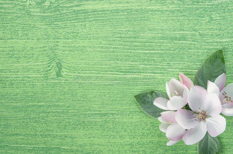 Naturlig bakgrund För Apple för vår vita rosa blommor träd med sidor på grön träbakgrund Lekmanna- l?genhet kopiera avst?nd royaltyfri fotografi