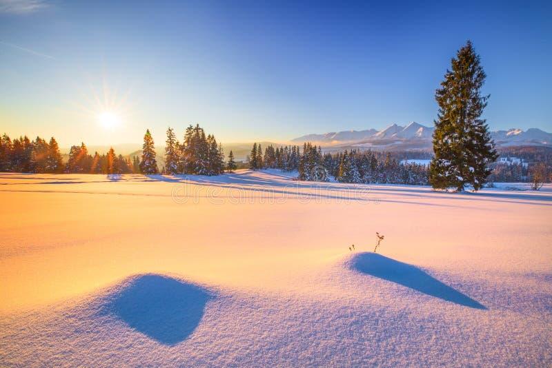 Naturlig bakgrund för vinter för gläntamorgon för skog frostig vinter för snowmobile för berg arkivfoto