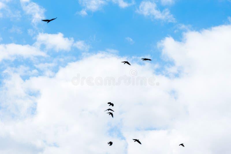 Naturlig bakgrund, h?rlig bl? himmel med vita moln och flygf?glar arkivfoto