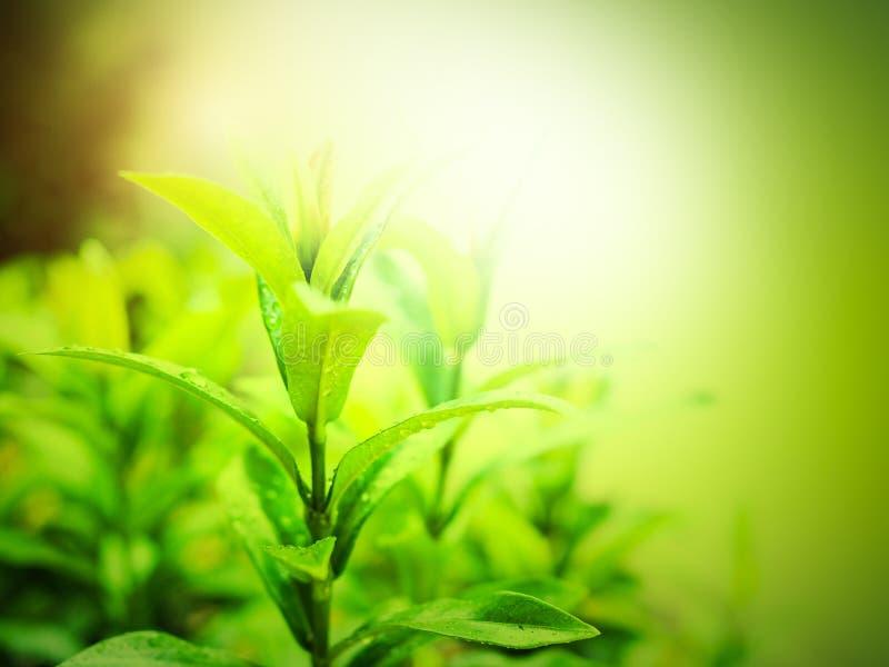 Naturlig bakgrund och miljö med träd med gröna sidor arkivbilder
