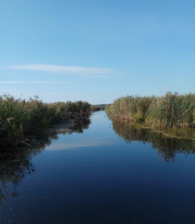Naturlig bakgrund Ryssland för blått härligt för flod gräs för blå himmel grönt gult royaltyfria bilder