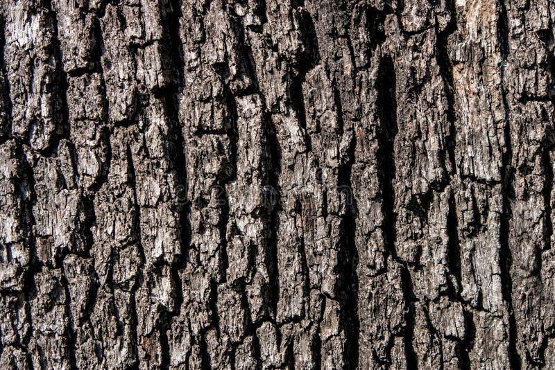 Naturlig bakgrund skjuten tree för skäll close upp royaltyfri foto