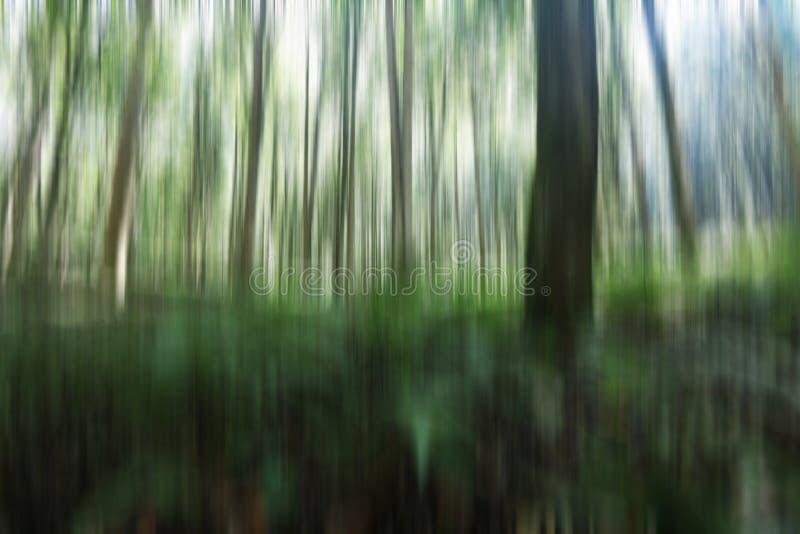 naturlig bakgrundsillustration Oskarp bild av träd och ljusen i gröna svartvita rörelsefärger Vertikal linje sikt royaltyfri fotografi