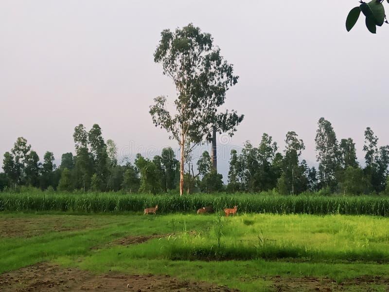 Naturlig bild från utrakhnd Indien arkivfoton