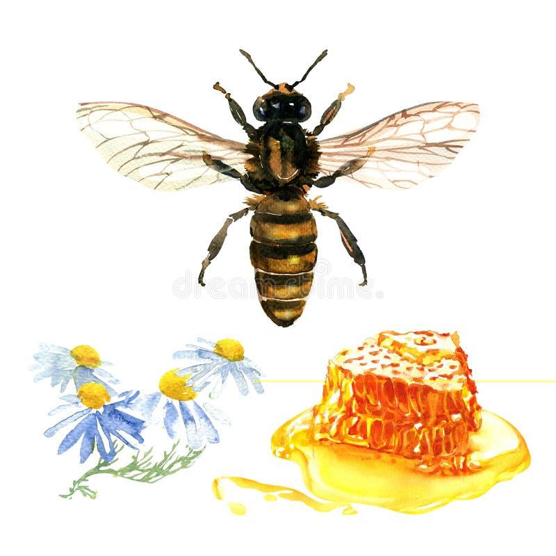 Naturlig blom- honung som är färgrik med det isolerade honungskakor, tusenskönablommor, den lösa kamomillen, biet och honung, dra royaltyfria foton