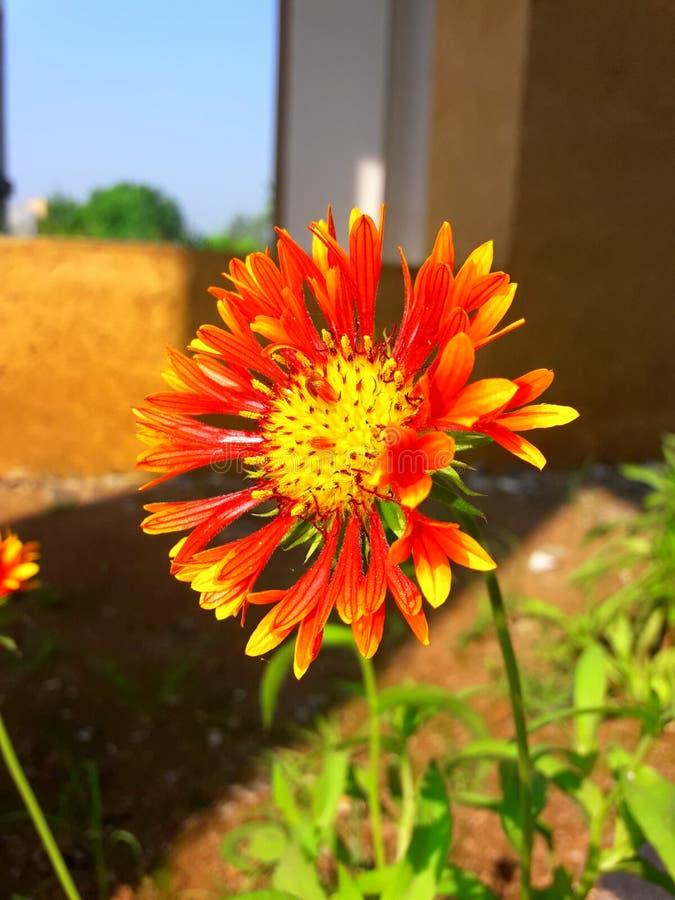 Naturlig blomma arkivbild