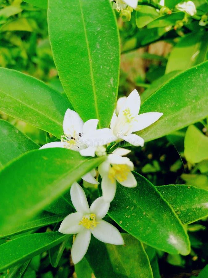 Naturlig blomma royaltyfria foton