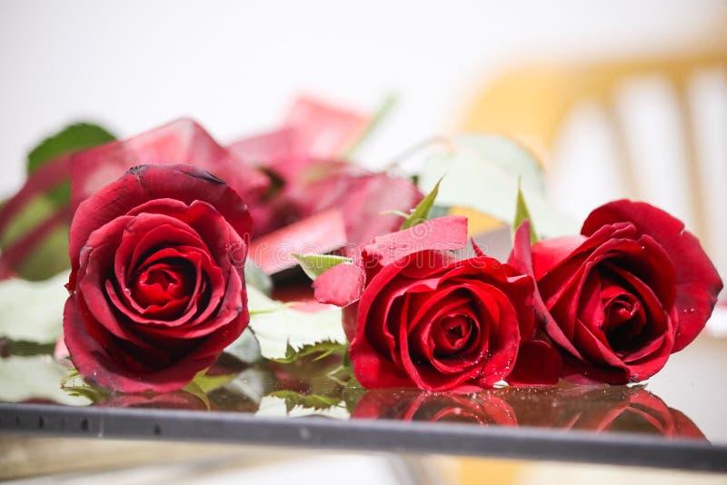 Naturlig blomma, härlig ros royaltyfri bild