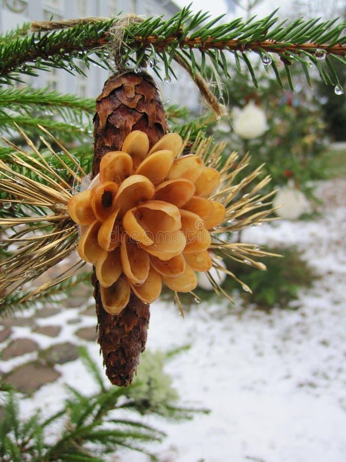 Naturlig blomma på conker på granträd i jul royaltyfri fotografi