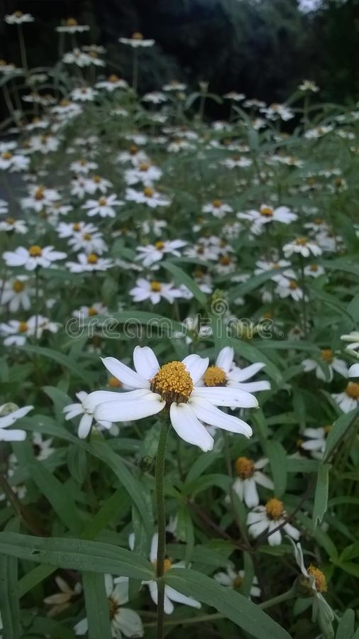 naturlig blommavit royaltyfri fotografi