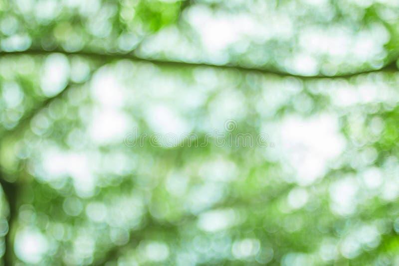 Naturlig bokehbakgrund, ny sund grön bio bakgrund med abstrakt suddig lövverk och ljust sommarsolljus arkivfoto