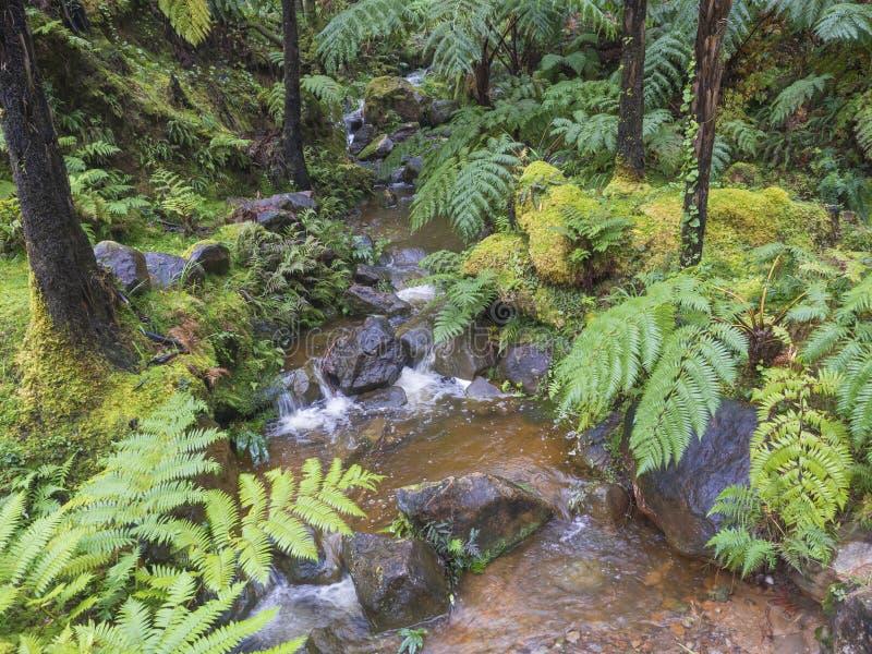 Naturlig brunnsort med den varma termiska vattenvåren, liten vikkaskaden med frodig trädferm, mossa och stenar i caldeiravelhaen, fotografering för bildbyråer