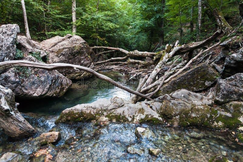 Naturlig fördämning från stupade träd på den Ulu-Uzen floden arkivbild