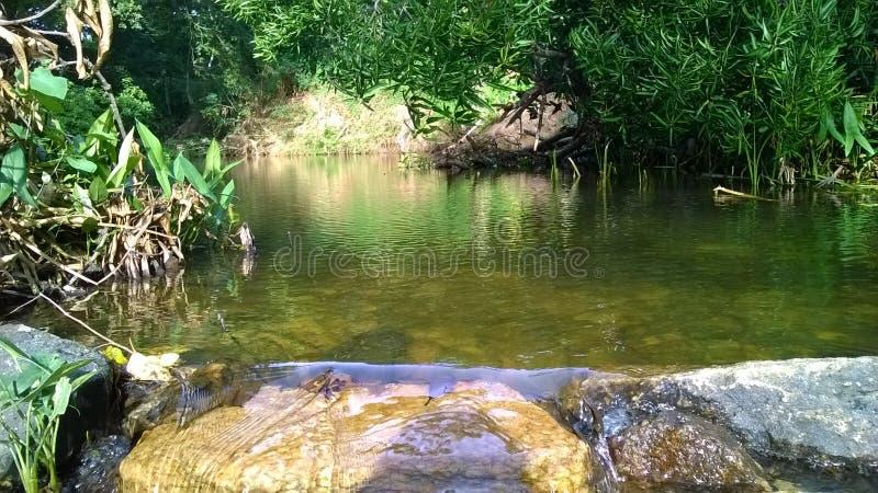 naturlig flodhakwatunawa arkivbild