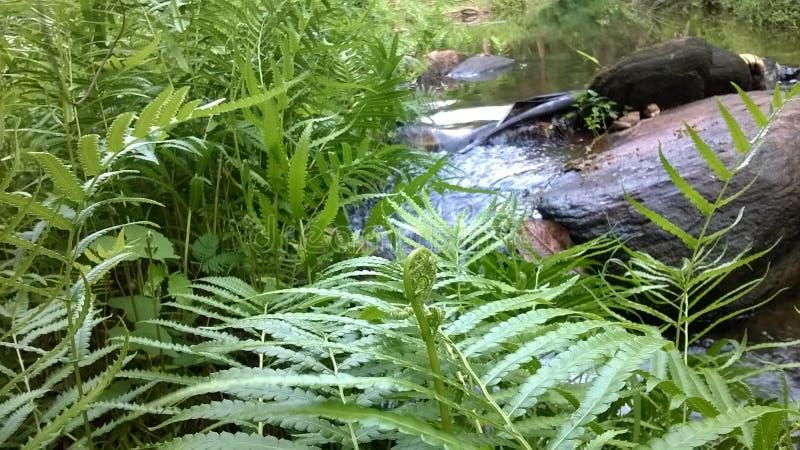 naturlig flodhakwatunawa arkivfoton