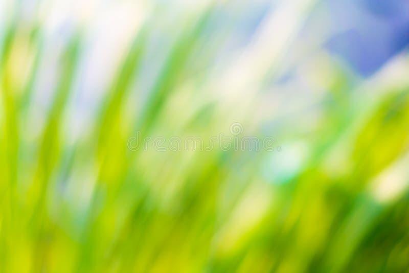 Naturlig gräsplan- och blåttbokehbakgrund arkivbild