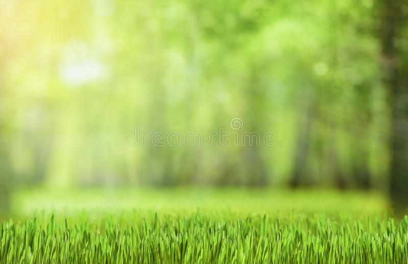 Naturlig grön skogbakgrund arkivfoton