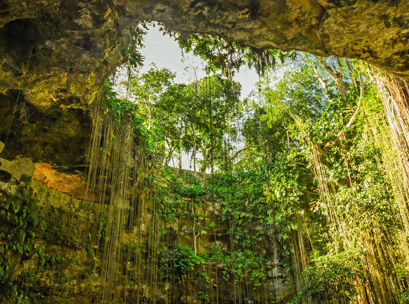 Naturlig grotta med pittoreska lianer, Mexico royaltyfria bilder