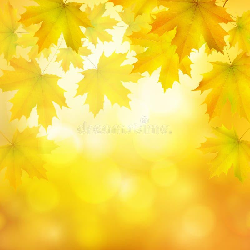 Naturlig gul orange fyrkantig vektorhöstbakgrund med lönnlöv och trädfilialer vektor illustrationer