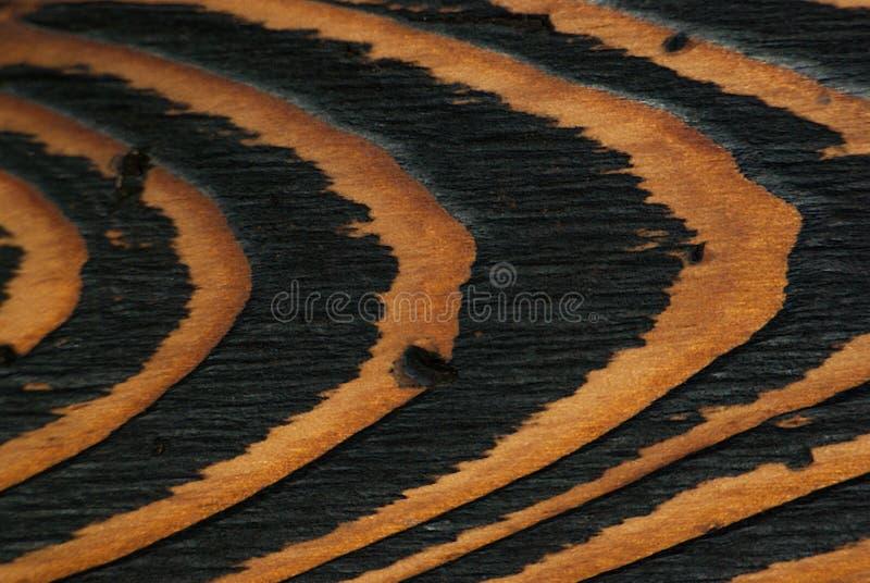 Naturlig härlig wood bakgrund royaltyfri foto
