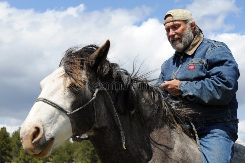 naturlig horsemanship fotografering för bildbyråer
