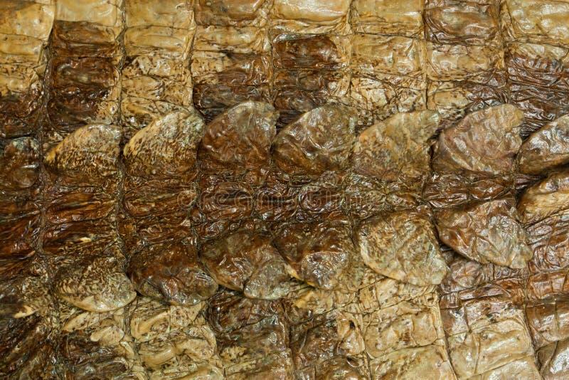 naturlig hudtextur för krokodil arkivfoton