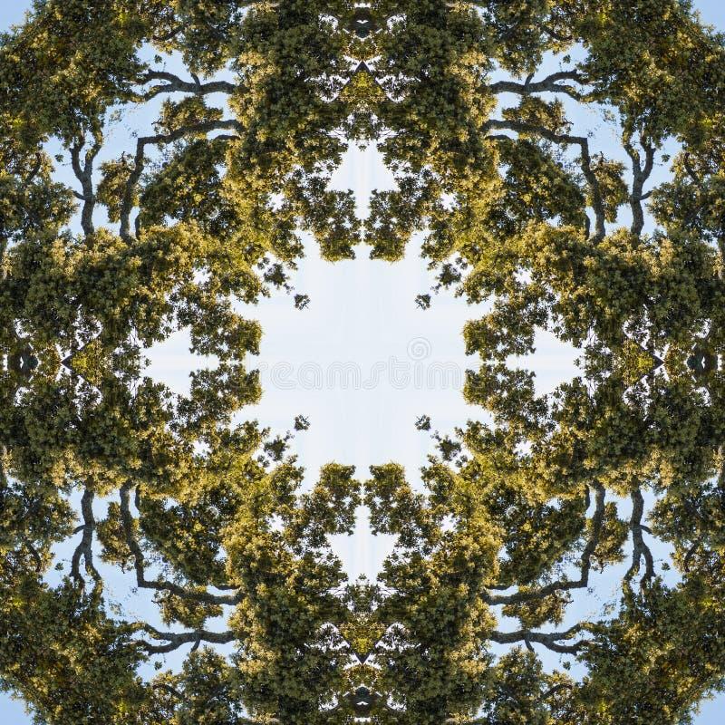 Naturlig kalejdoskop med naturliga bevekelsegrunder vektor illustrationer