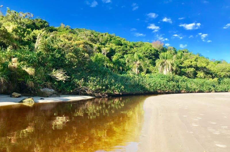 Naturlig kontrast i Florianopolis, Santa Catarina Brazil royaltyfria bilder