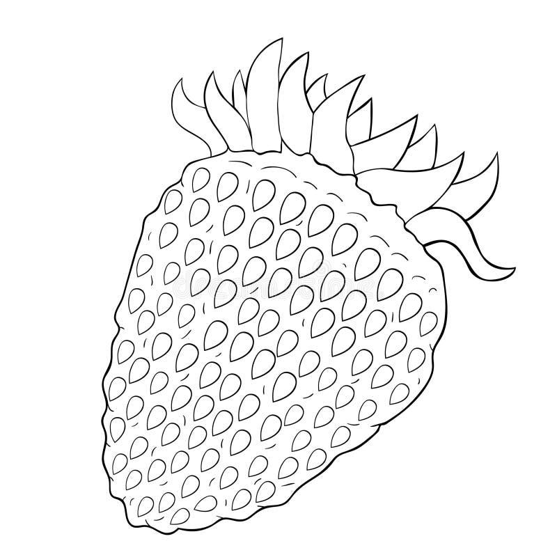 Naturlig mogen sommar för jordgubbebär också vektor för coreldrawillustration royaltyfri illustrationer