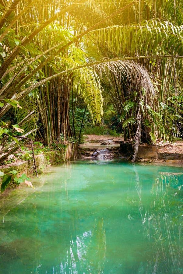Naturlig oaspölliten vik i tropisk bambudjungel i norr Trinidad och Tobago arkivbilder