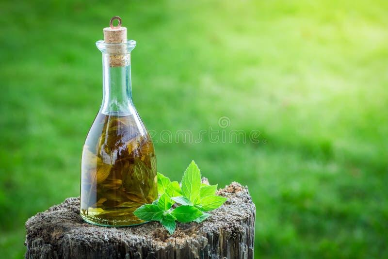 Naturlig och hemlagad likör med mintkaramellen och alkohol royaltyfria foton