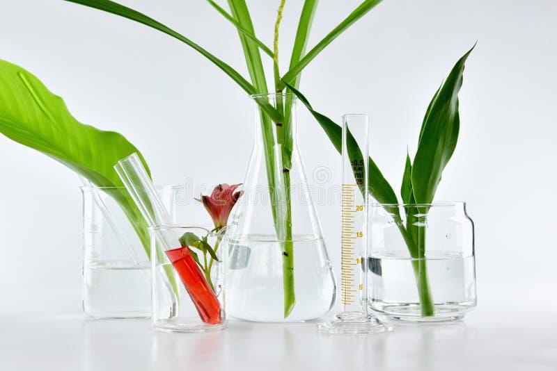 Naturlig organisk botanik och vetenskaplig glasföremål, alternativ örtmedicin, naturliga skönhetsprodukter för hudomsorg arkivbilder