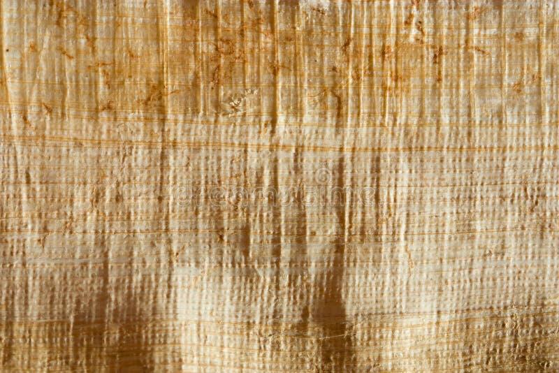 Naturlig papyrus royaltyfria bilder