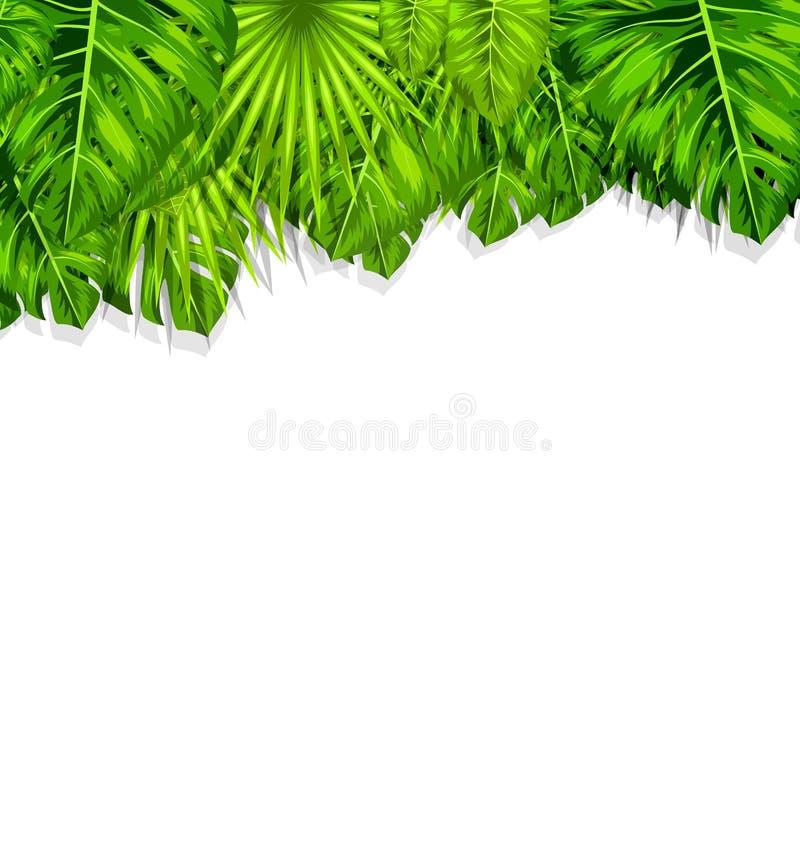 Naturlig ram med gröna tropiska sidor royaltyfri illustrationer