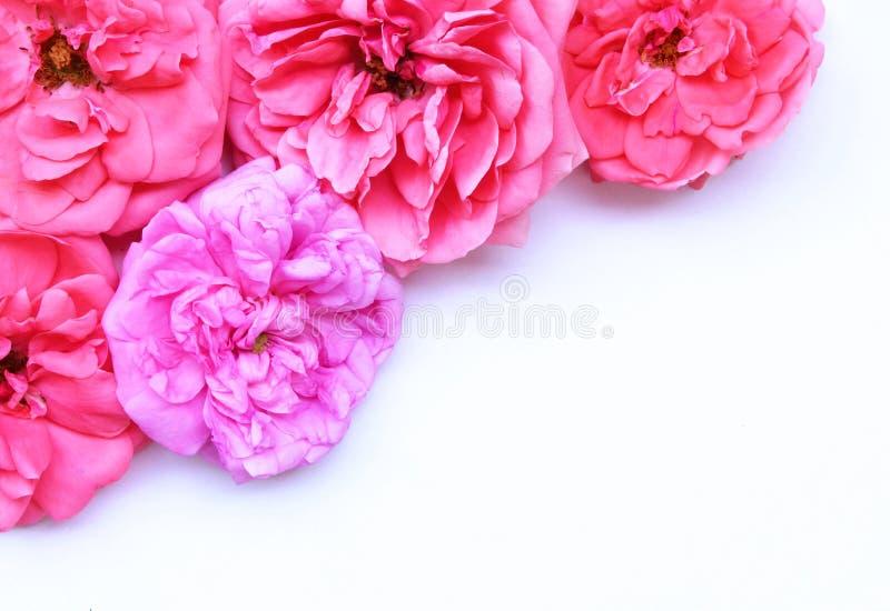 Naturlig rosa rosbakgrund Lekmanna- lägenhet Top beskådar Töm utrymme för din text Romansk och förälskelsekortbegrepp royaltyfria bilder