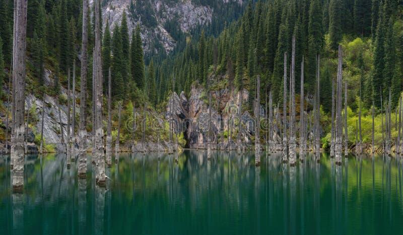 Naturlig sikt av södra Kasakhstan i Tyan-Shan berg - alpin Kaindy sjö också som är bekant som björk sjön eller undervattens- Fore arkivbilder