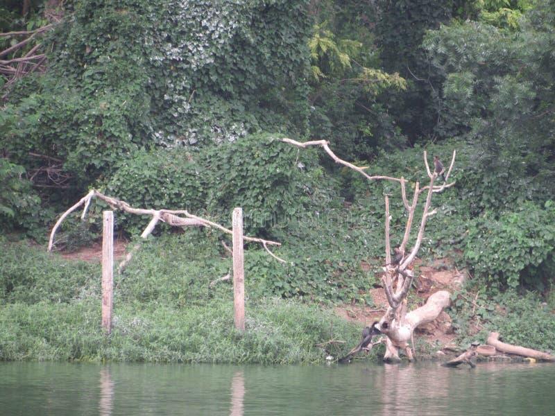 Naturlig skönhet för härligt jungal område royaltyfri fotografi