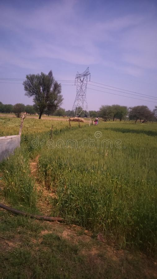 Naturlig skönhet från jordbruk royaltyfri bild