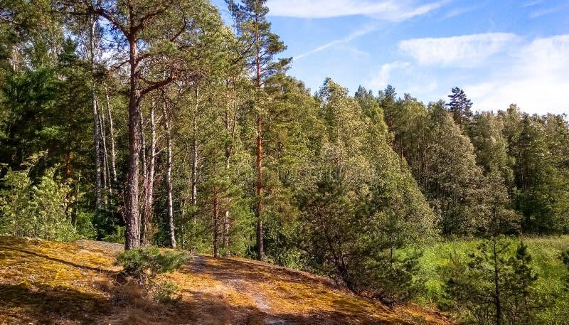 Naturlig skog med granitstenblock Nordlig natur, skog på en solig dag med moln i himlen royaltyfri foto