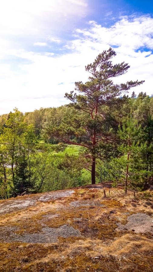 Naturlig skog med granitstenblock Nordlig natur, skog på en solig dag med moln i himlen royaltyfria bilder