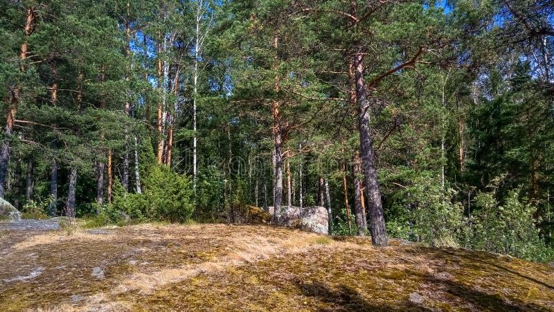 Naturlig skog med granitstenblock Nordlig natur, skog på en solig dag med moln i himlen royaltyfria foton