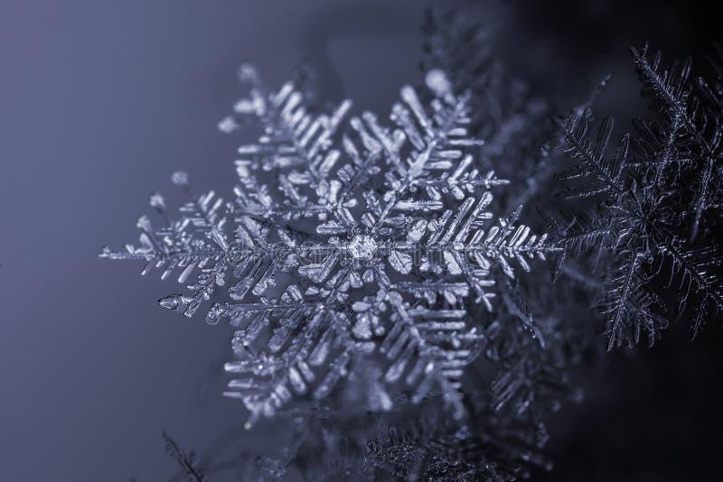 Naturlig snöflingakristall på mörk bakgrund arkivbilder