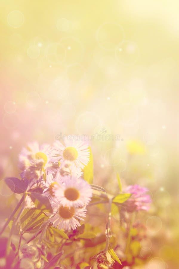 naturlig sommar för bakgrund royaltyfri illustrationer